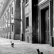 Napoli 1958