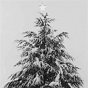 mapplethorpe albero di natale 1987 stampa con ritaglio