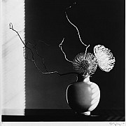 mapplethorpe composizione floreale