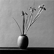 mapplethorpe iris 1982 9