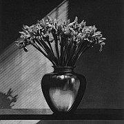 mapplethorpe iris 1987 66