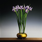 mapplethorpe irises 1988 3 color