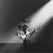 mapplethorpe orchidea in un raggio di luce