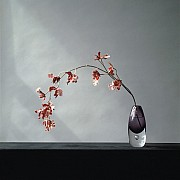 mapplethorpe orchids 1982 color