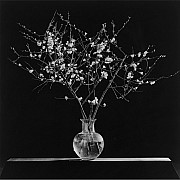 mapplethorpe rami in un vaso