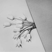 mapplethorpe tulipani 1984 16