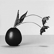 mapplethorpe tulipani 1984 9
