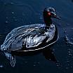 steve mc curry uccello ricoperto di petrolio in mare durante la guerra del golfo marzo 1991