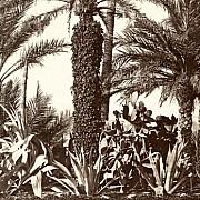 liguria ottocentesca 11