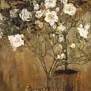 le azalee 1884 1885