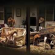 julie mcguire street dogs