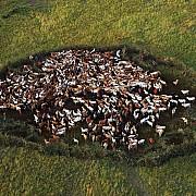 yann arthus bertrand mucche campo kichwa tembo kenya