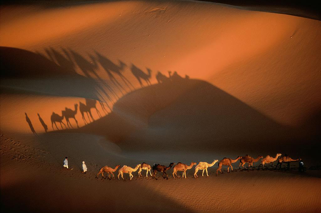 Fila dromedari nei pressi di Nouakchott, Mauritania