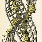 Escher in mostra 7