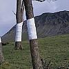 Linee dell'orizzonte ed alberi nella visione di Zander Olsen