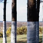 zander olsen tree line 008