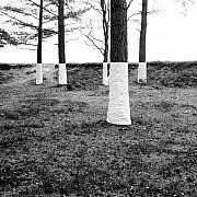zander olsen tree line 009