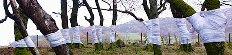 Zander Olsen - Linee ed alberi