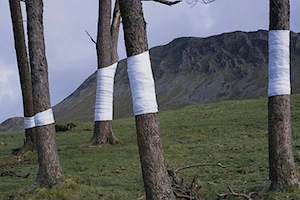 Linee dell'orizzonte ed alberi