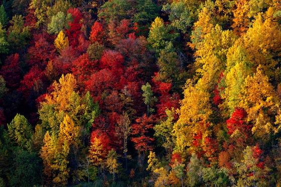 Fogliame d'autunno con i colori accesi