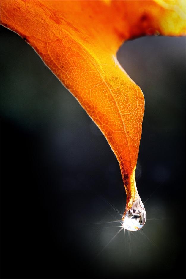 Foglia d'autunno con goccia