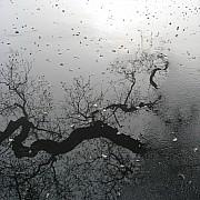 albero nella pozzanghera