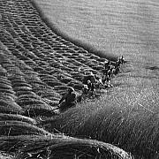 erno vadas mietitura 1937