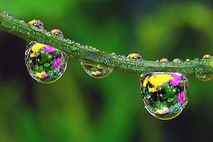 Il mondo visto attraverso minuscole goccioline d'acqua