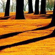 alberi nebraska