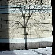 linee helsinki albero neve muro edificio luce ombra rami tronco