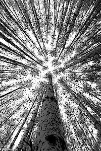 tronchi convergenti