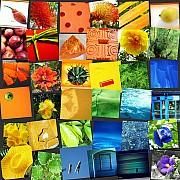 collage arcobaleno colori 4