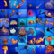 mosaico meduse mare blu