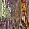 Macrofotografia composita