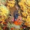 Piccola introduzione alla fotografia digitale subacquea