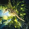 david-doubilet-a-seahorse-hovers-under-kelp-in-australia
