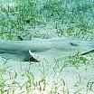 squalo chitarra c alessio gagliardo
