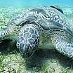 tartaruga c alessio gagliardo