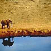 elephant reflection stevemac 107555302