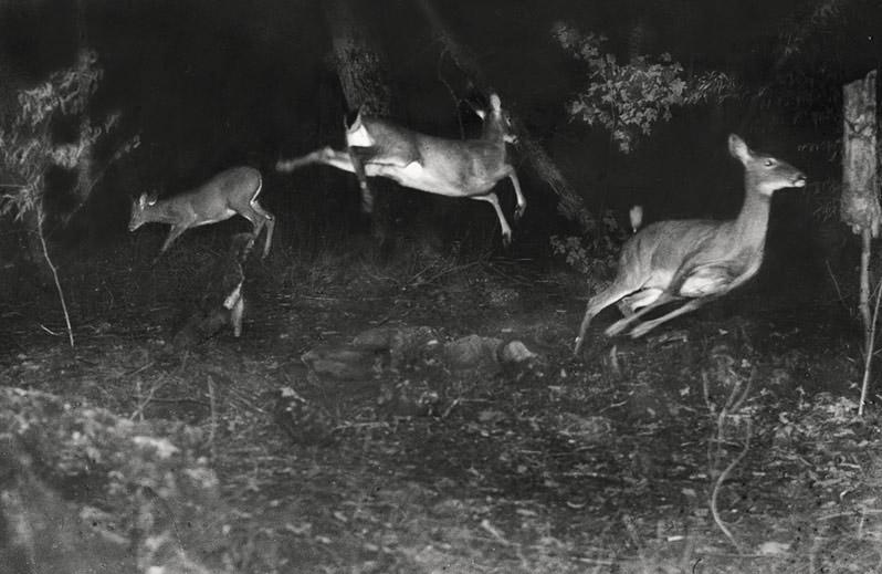 Animali fotografati di notte