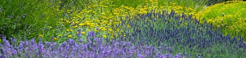 I fiori della Provenza