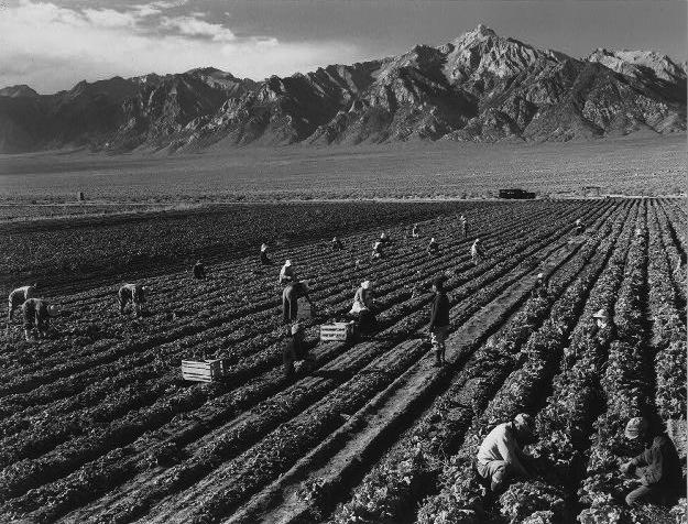 Lavoro nei campi nella valle di Manzanar