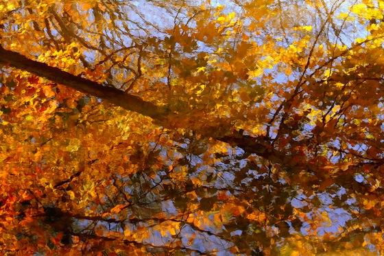 Riflessi d'autunno a Toronto