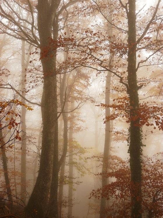 Bosco nella nebbia in Auvergne