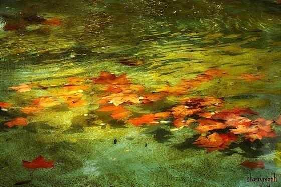 Foglie d'autunno nell'acqua