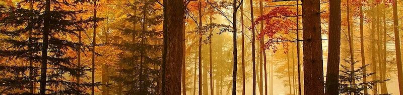 Fotografie della natura in autunno