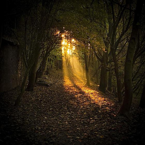 Raggi di luce nel bosco