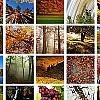 L'incanto della natura in autunno